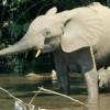 Congo Hands Elephant Poachers Maximum Prison Sentence