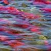 State Ballots Span Salmon, Carbon Fee, Renewables, Water
