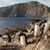 Argentina Protects Wonders of the Patagonian Sea