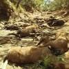 Heatwave Parches Australia, Kills Wild Horses