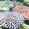 Climate Change Disrupts Recovery of Great Barrier Reef