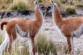 NGOs Buy Grazing Rights to Protect Argentina's Species
