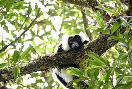 Climate, Logging Menace Madagascar's Unique Ecology