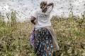 Unprecedented Locust Swarms Invade East Africa