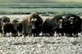 Trump Opens Arctic National Wildlife Refuge to Oil and Gas