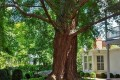 Living Near Trees Prevents Blood Vessel Damage