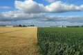 European Commission Would Limit Food-based Biofuels