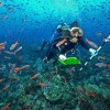 Galapagos Corals May Predict the Future of Reefs Worldwide