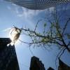 Toronto Trashes Its Plastic Bag Ban