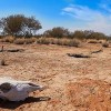 Leaked UN Report Predicts 'Irreversible' Climate Change
