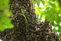 EU Prepares to Ban Three Pesticides Harmful to Bees