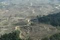 Indonesian Paper Giant Pledges No More Deforestation