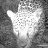 World's Largest Camera Trap Study Snaps Millionth Photo