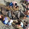 Fossil Found on Brazilian Beach Key to Blue Whale Survival