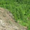 'Zero Illegal Deforestation' Target Set on First World Forests Day