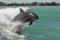 Loud Seismic Tests Probed for Harm to Whales, Dolphins