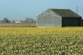 Europe Adopts Greener Agricultural Policy