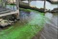 Florida Waters Alive With Toxic Algae, Toxic Politics