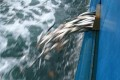 EU Bans Fish Discards Under New Common Fisheries Policy