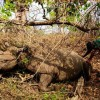 Poachers Kill Three of Malawi's Rare Black Rhinos