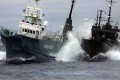 Battle Lines Drawn for 2013-2014 Antarctic Whaling Season
