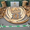 Hong Kong to Incinerate Huge Ivory Stockpile