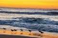 World Oceans Day 2014 Dawns on Oceans in Danger