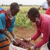 Family Farmers Take Center Stage on World Food Day