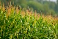 European Parliament Backs GMO Choice for Member States