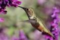 Pollinating Birds, Mammals Falling Victim to Extinction
