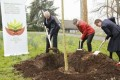 Global Forest Restoration Goal Grows