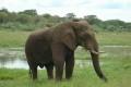 Mozambique Police Execute HugeIvory, Rhino Horn Seizure