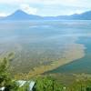 Toxic Algae Invade Guatemala's Treasured Lake Atitlan