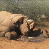 Wildlife Conservation Powers Team Up: Poachers Beware
