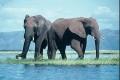 Zimbabwe's Plans to Sell Ivory to China Blocked