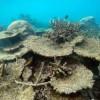Coral Die-Off Devastates Great Barrier Reef