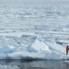 Sea Ice at Both Poles Hits Record Lows