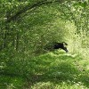 Polish Government Chops Down Europe's Primeval Forest