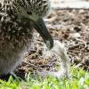 U.S. Aquariums Battle Plastic Waste in Oceans, Lakes