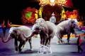 Ireland, India, Italy Ban Wild Animals in Circuses