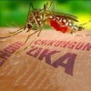 Mosquito & Tick-borne Viruses Thrive on Climate Change