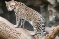 Trump Attacks Endangered Species Act