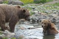 U.S. Judge Halts Grizzly Bear Hunting for Two Weeks