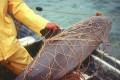 Extinction Looms for World's Smallest Porpoise