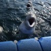 Whales to Be Freed From Russian Whale Jail This Summer
