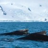 Japan Restricts Its Whalers to Japanese Waters