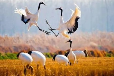 New World Heritage: China's Bird Joy, Iran's Ancient Forest