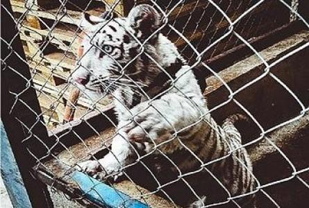 Global Operation Thunderball Grabs Wildlife Criminals