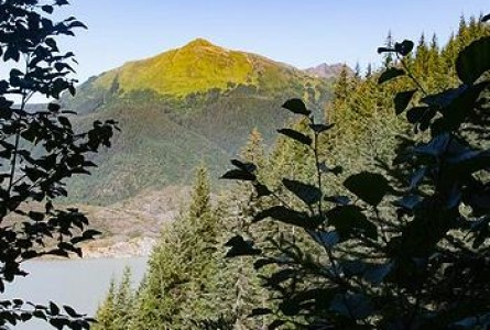 Largest U.S. National Forest Faces Roadless Rule Repeal