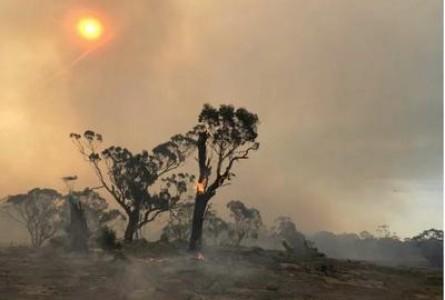 Deadly Australian Bushfires Linked to Climate Change